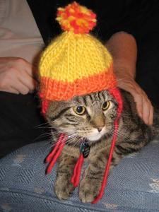 Cunnin' Kitten